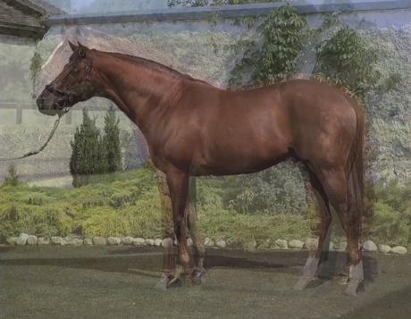 John Stezaker: Horse